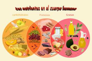 Nutrientes en el cuerpo humano